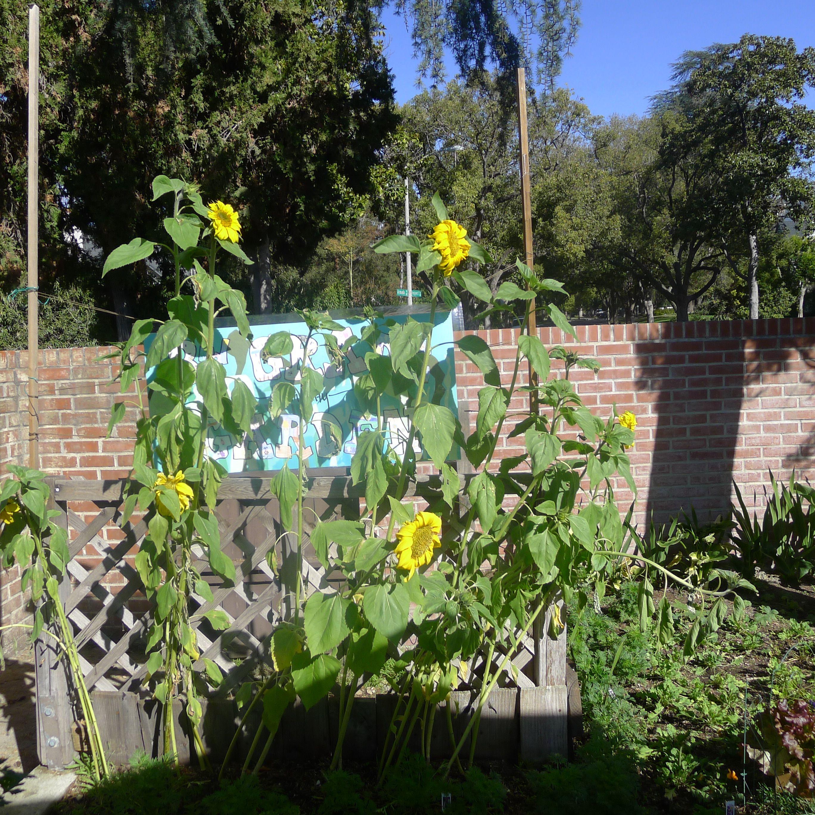 A garden grows at Chandler!