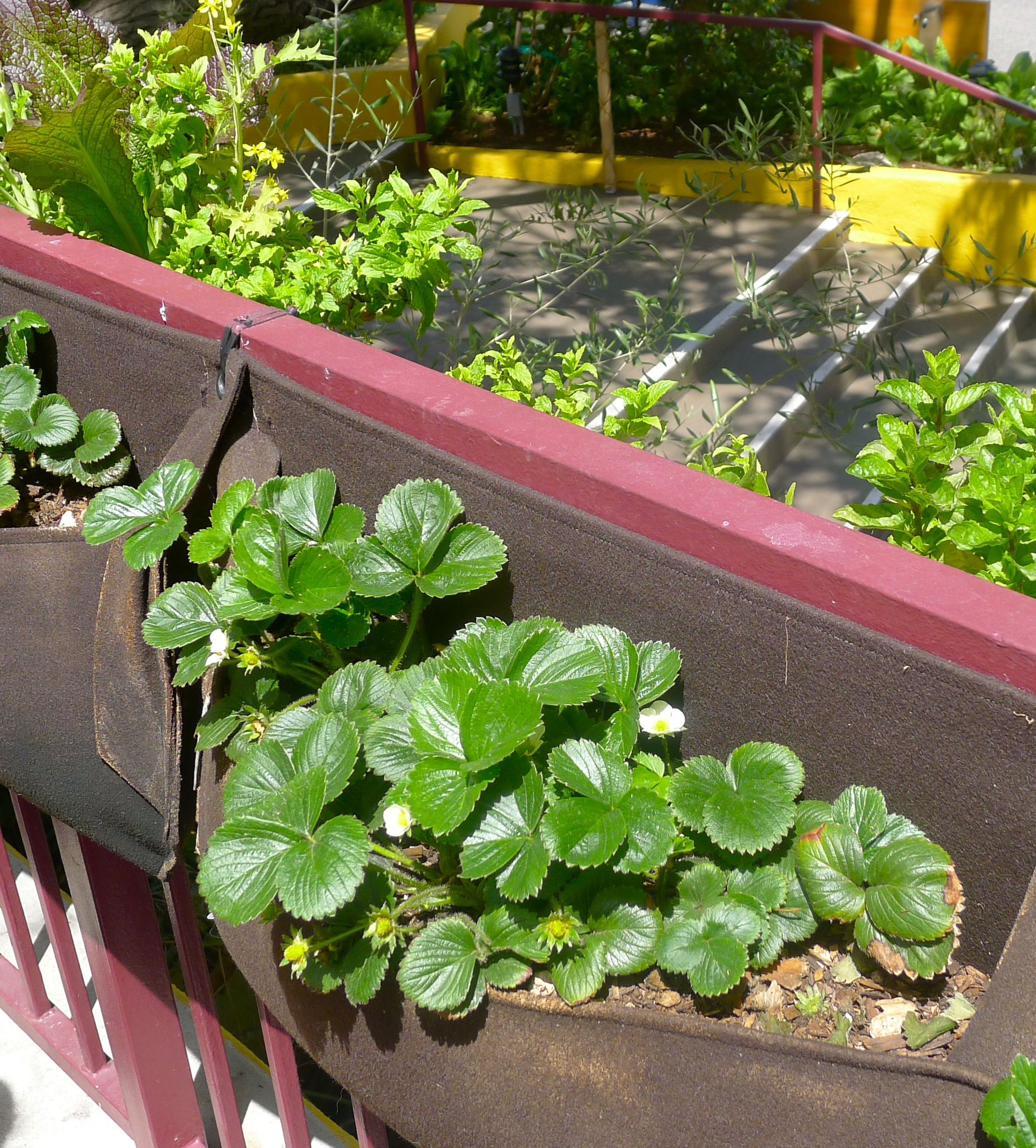 Edible Landscaping And Fairy Gardens: Beyond The Brochure
