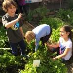 GardeningClub3