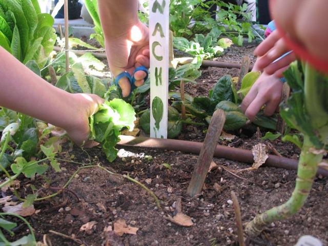 Wildwood_Garden_Harvesting 1