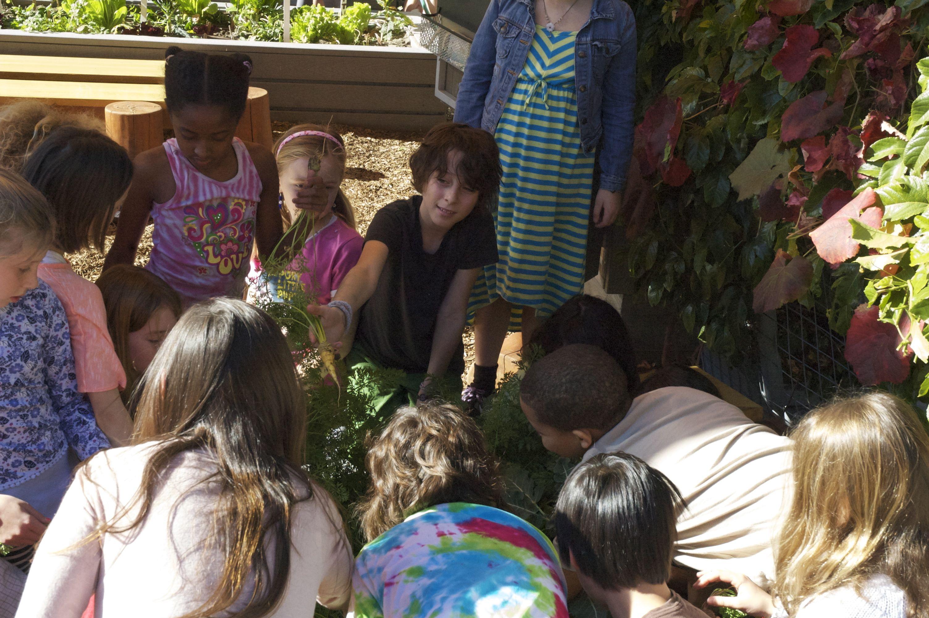 Kids harvesting carrots