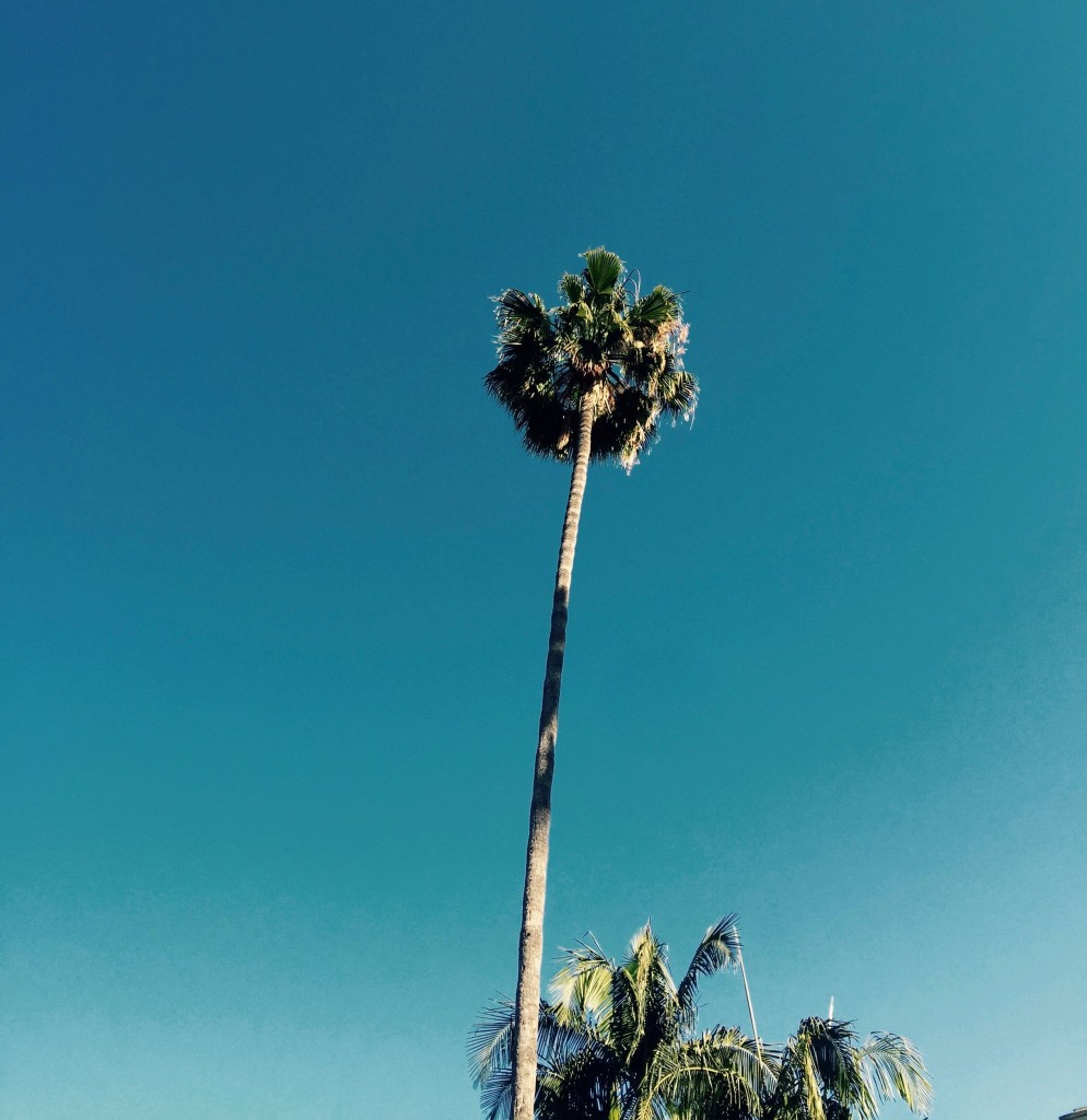 Palm Trees (1)